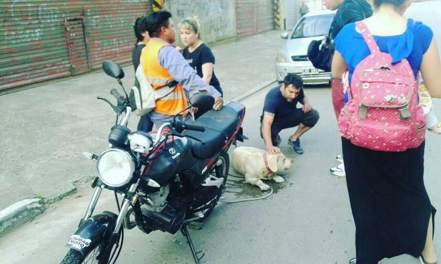 Video | Arrastr� al perro en su moto y los vecinos lograron detenerlo