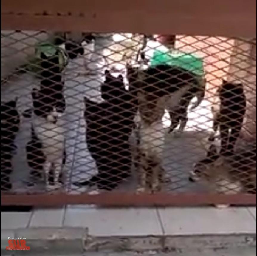 18 gatos y un perro atrapados en una casa tras fallecer su dueña