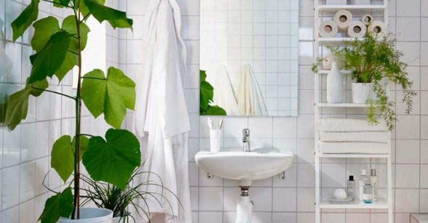 Las mejores plantas para poner en tu ba�o