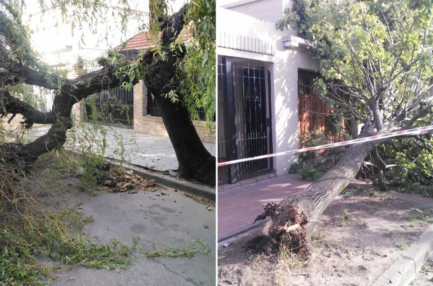 Fuertes ráfagas de viento tiraron árboles y postes en Quilmes