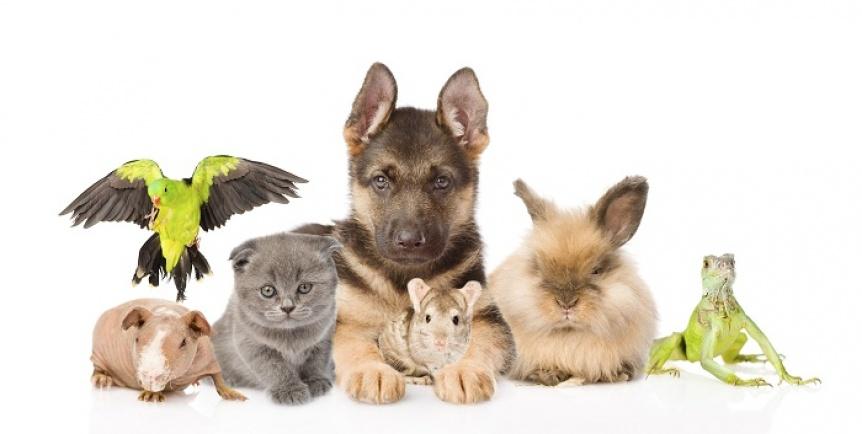 Al 76% de los argentinos les preocupa qué hacer con las mascotas en vacaciones