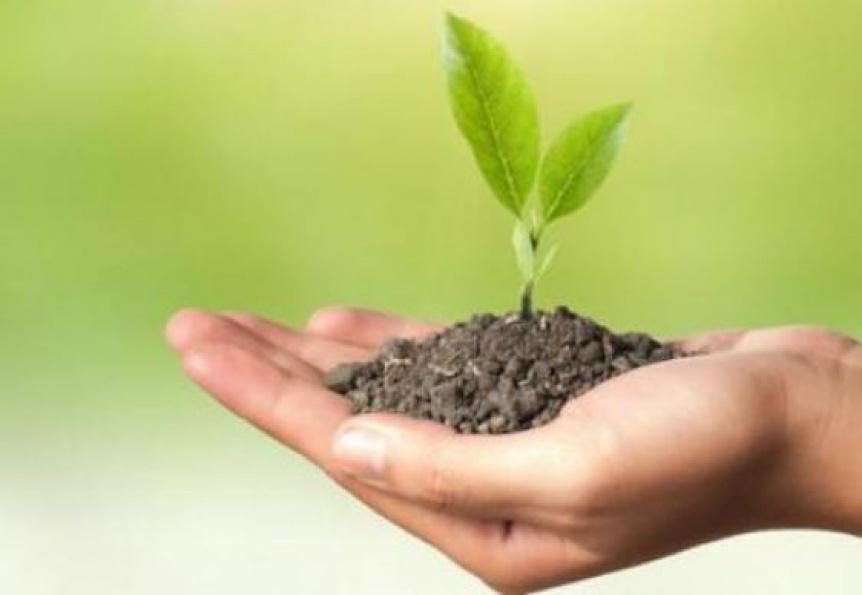 En la UNQ, la ciencia germina pronto: ¡Día de la fascinación por las plantas!