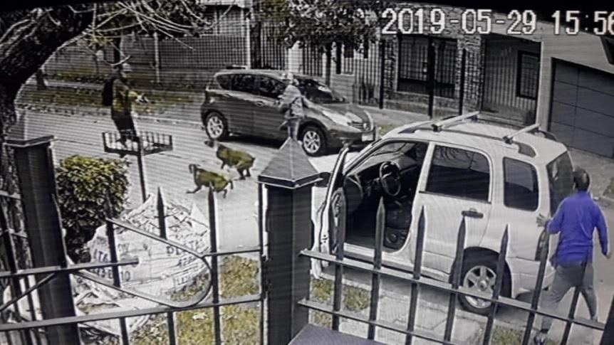 Sus perros lo salvaron de una entradera: Huyeron disparando a los animales